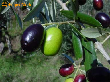 Extra vergin olijfolie