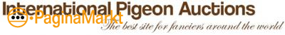 International Pigeon Auctions - IPA - Duiven