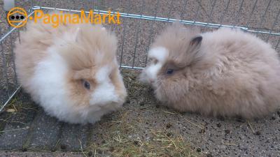 2 tamme konijntjes