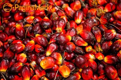 Geraffineerde en ruwe palmolie en zonnebloemolie