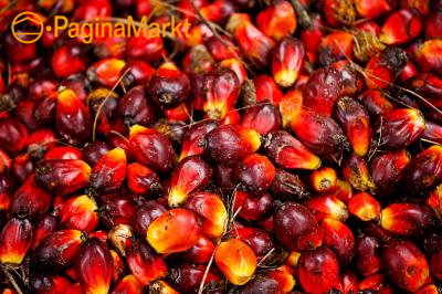 Verfijnde en ruwe palmolie en zonnebloemolie